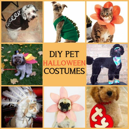 Easy u0026 Comfy DIY Halloween Pet Costumes : pets costumes halloween  - Germanpascual.Com