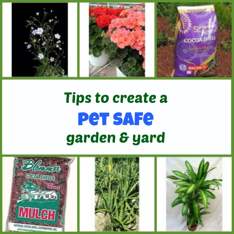 Tips on Creating a Pet-Safe Garden and Yard | Tree Hugging Pets